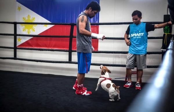 Мэнни Пакьяо со своей собакой в тренировочном зале
